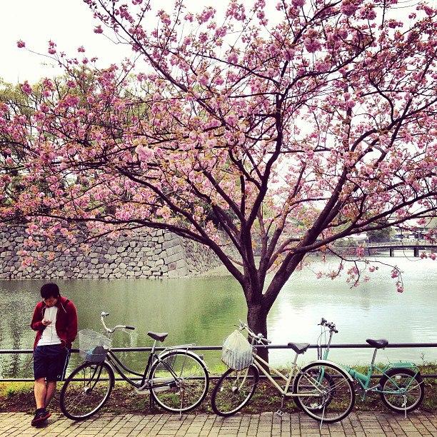 《日本對頭人》系列 – 櫻花、日本米、咖喱